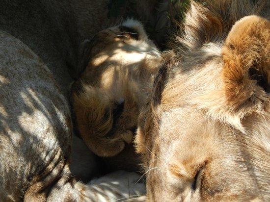 Safari Kenya Watamu - Day Tours: pisolo