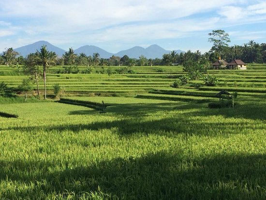 COMO Shambhala Estate: Rice field trekking
