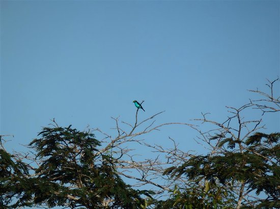Refugio Amazonas: Canopy Tower - view of a bird in the distance