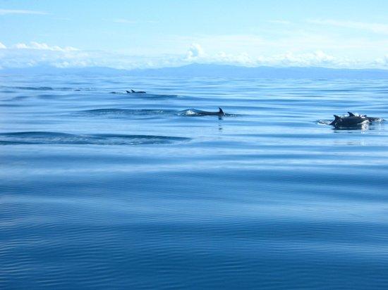 Nuqui, Κολομβία: Delfines acompañan la lancha