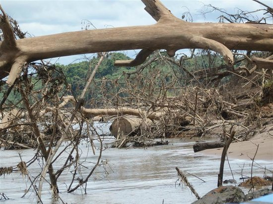 Tambopata Research Center : the banks have broken - dangerous boat ride to get there