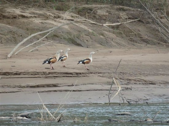 Tambopata Research Center : gorgeous geese