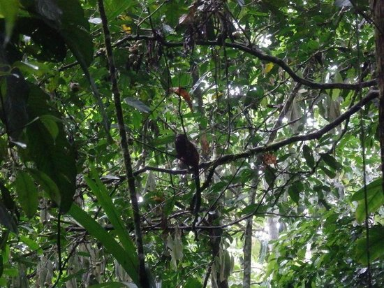 Tambopata Research Center: monkeys