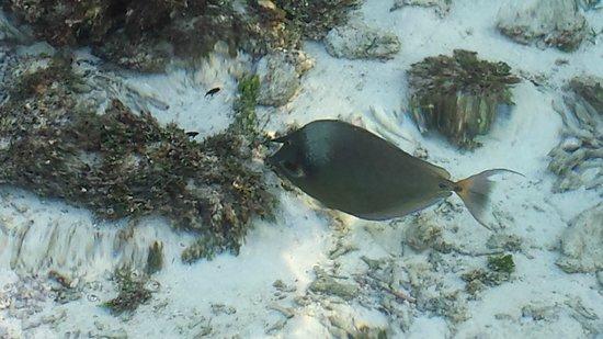 Medhufushi Island Resort : fish