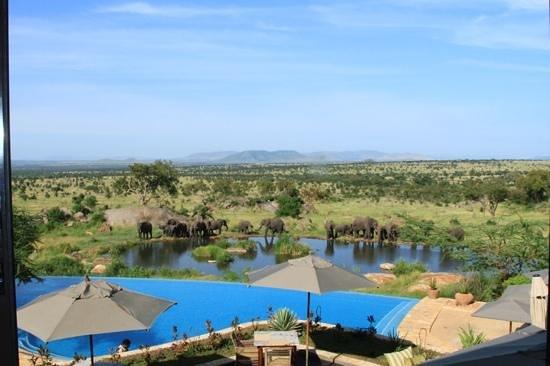 Four Seasons Safari Lodge Serengeti : pools.