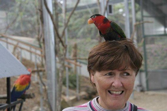 Maleny Botanic Gardens & Bird World: What a funny Hat.