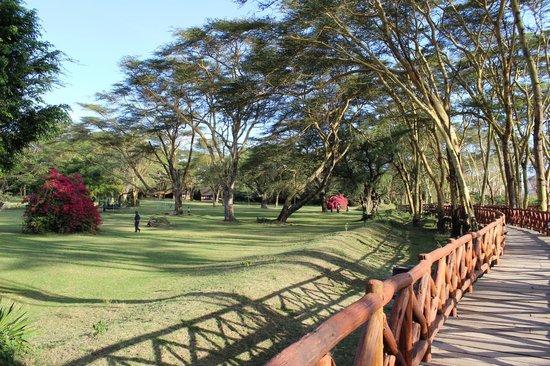 Lake Naivasha Country Club-Sun Africa Hotels: Garden