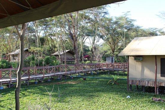 Lake Naivasha Country Club-Sun Africa Hotels : Luxury tents