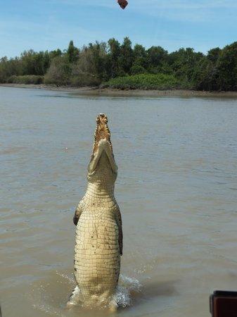 Jumping Crocodile Cruises: Croc