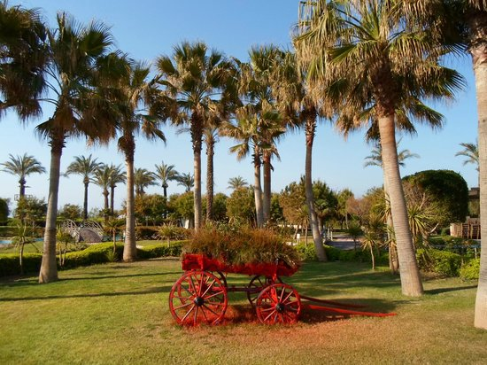 Miracle Resort Hotel: Территория отеля