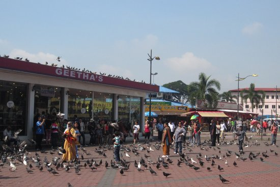 Batu Caves : Pigeons are here
