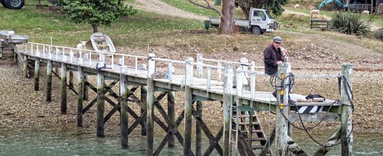 Pelorus Mail Boat: Ewe have mail...