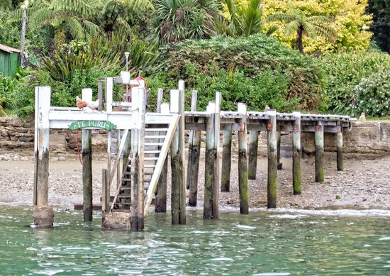Pelorus Mail Boat: Hens waiting for their post.