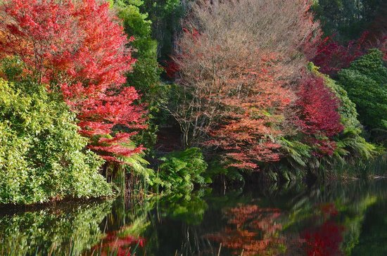 National Rhododendron Gardens: Reflective pools