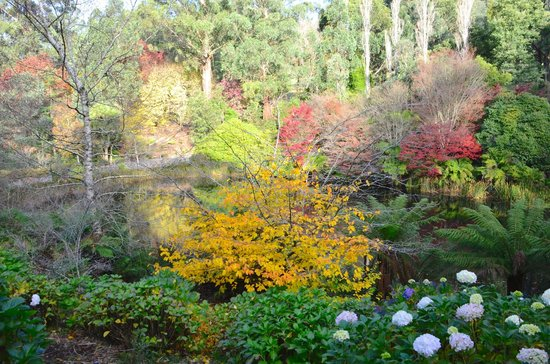 National Rhododendron Gardens: All the colours of autumn in Australia