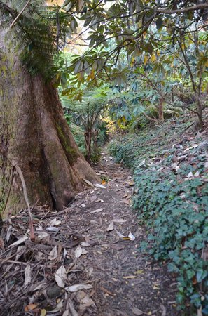 National Rhododendron Gardens: Adventurous paths for the young at heart