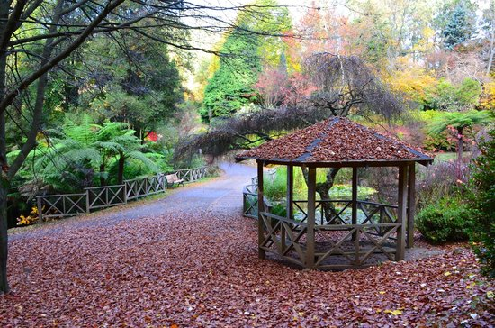 National Rhododendron Gardens: Autumn leaves drop like confetti