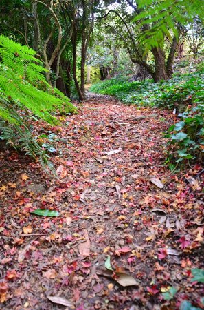 National Rhododendron Gardens: Leaves like confetti on the ground