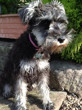 The Malthouse B&B: Our dog Poppy