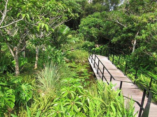 The Ritz-Carlton, Okinawa : ヤンバルの森 庭園