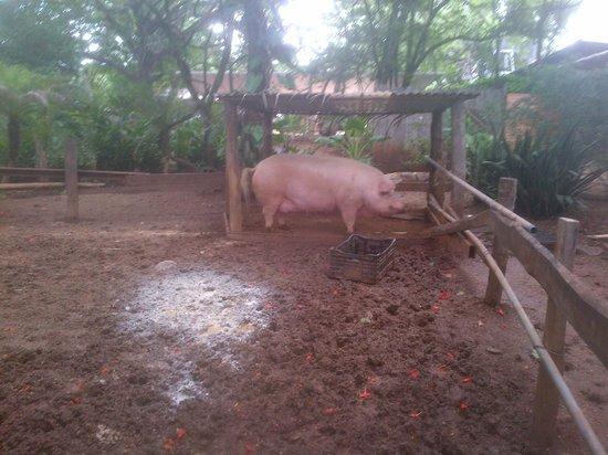Lola's: Lola the pig