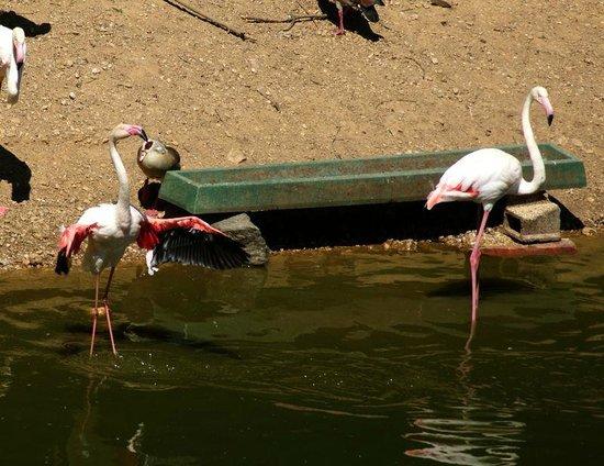 Zoo Des Trois Valles: *