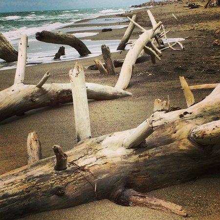 Hotel Il Pellicano: Rough Coast Maremma Nat'l Park