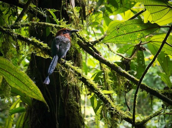 Anywhere Costa Rica - Day Tours: From a trail near Arenal