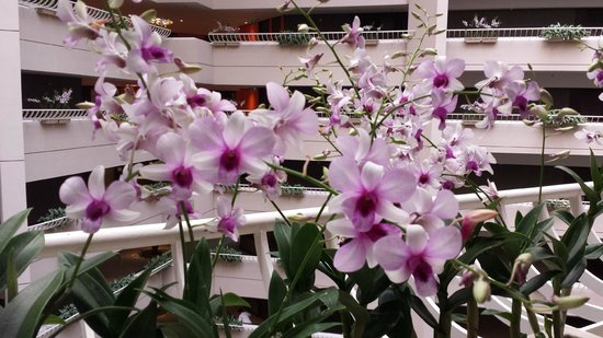 Pan Pacific Singapore: Orchids at Club level