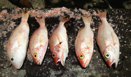 Sugar Reef Cafe: Red snappers