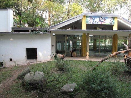Guangzhou Zoo: ガラスの家のパンダ