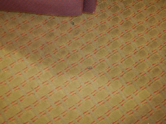 Days Inn Norton VA: burns in carpet