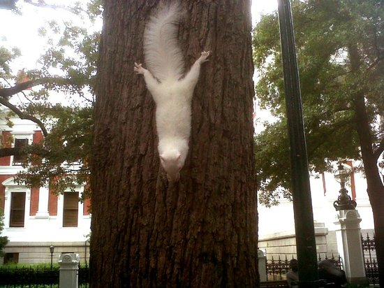 Wanderlust - Cape Town on Foot Walking Tour: Albino Squirrel in Company's Gardens