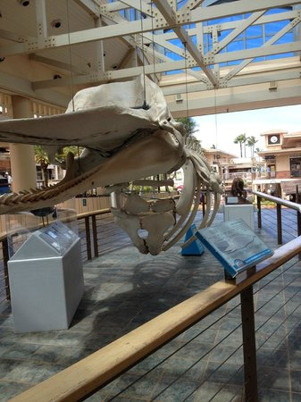 Whalers Village Museum: Whalers Museum