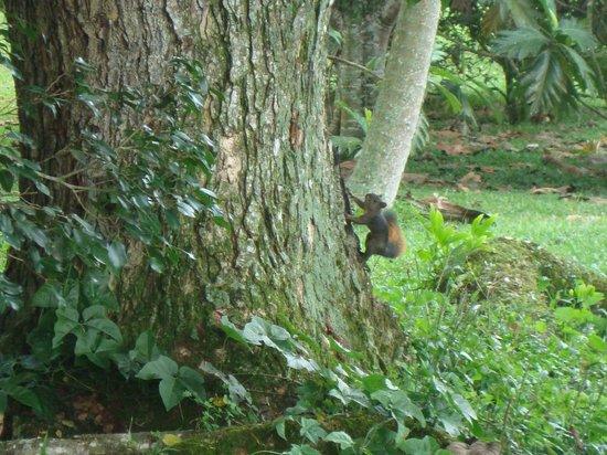 Finca Villa Nora: Squirrel - Garden Finca Nora