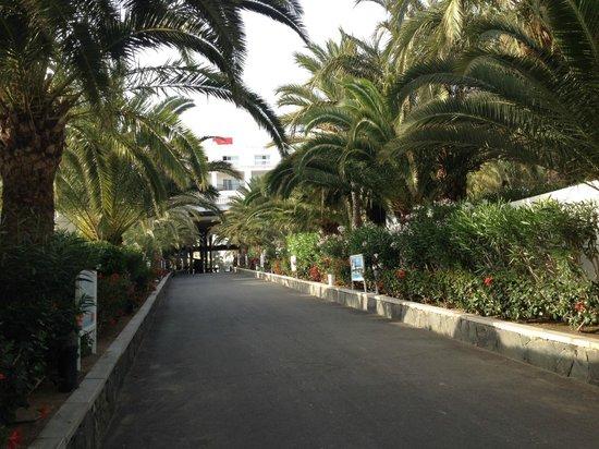 Hotel Riu Palace Maspalomas: Парк на территории отеля
