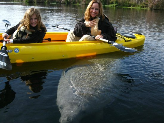 Central Florida Nature Adventures : The Manatees are so cute