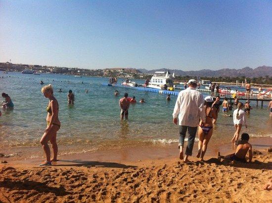 Sonesta Beach Resort & Casino : пляж