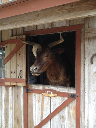 Babcock Ranch Preserve: Lulu