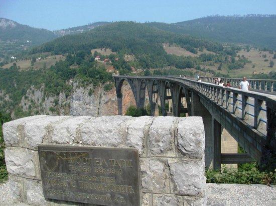 Tara Bridge : ...