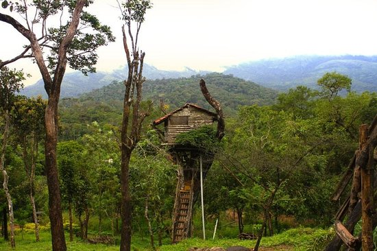 Tree House - Bethel Home Stay
