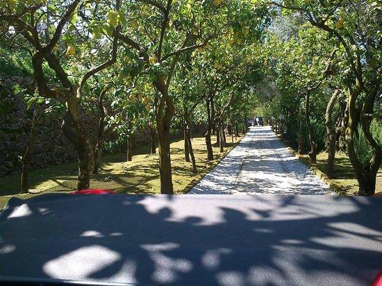 Villa Oriana Relais: lemon tree garden