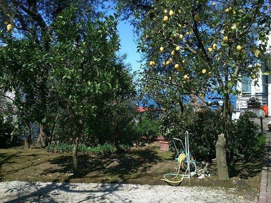 Villa Oriana Relais: lemon trees
