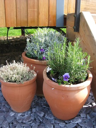 Dawn Chorus Holidays - The Pines: flower pots