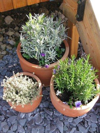 Dawn Chorus Holidays - The Pines: plants