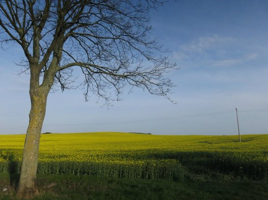 Dorothea Garni: Fields