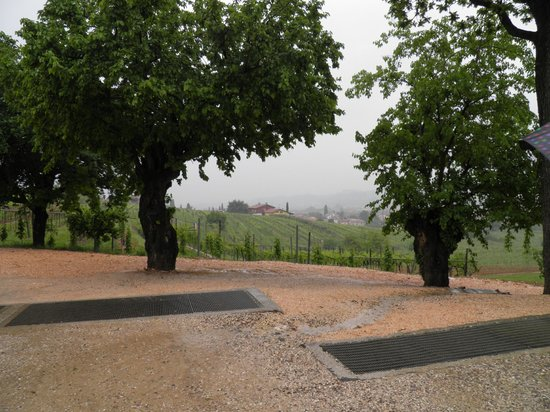 Veneto Tours - Day Tours: view from Brigaldara Winery