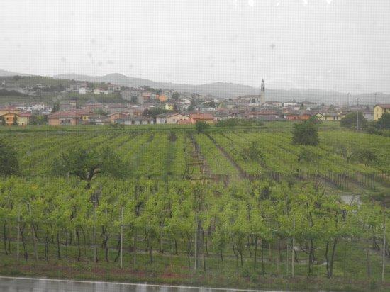 Veneto Tours - Day Tours : view out the window from Tessari ... gorgeous!