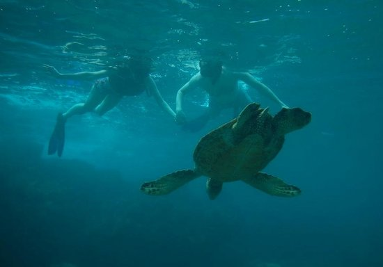 Maui Kayaks : Just cruising with a turtle