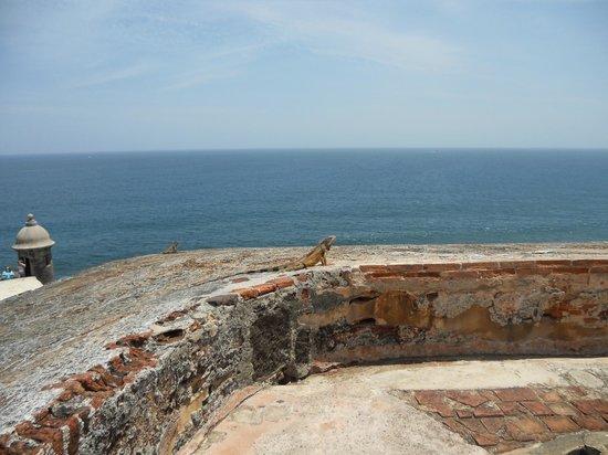 Castillo San Felipe del Morro: Lots of natives at the fort